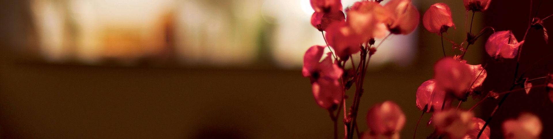 Primer plano flores rojas