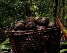 Vegetación y canastos altos con frutos en la selva.